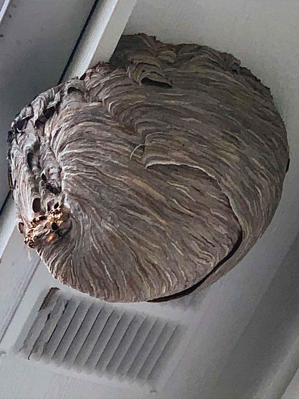 beehive-hornet-nest-removal-extermination-service-pest-control-grand-rapids-mi